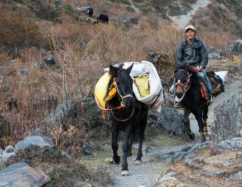Horse -Main Transportation of Mountain